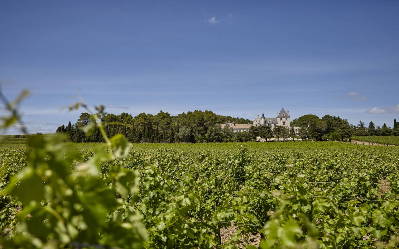 View of the vineyards and the castle, vineyards Languedoc, Domaine & Demeure events.
