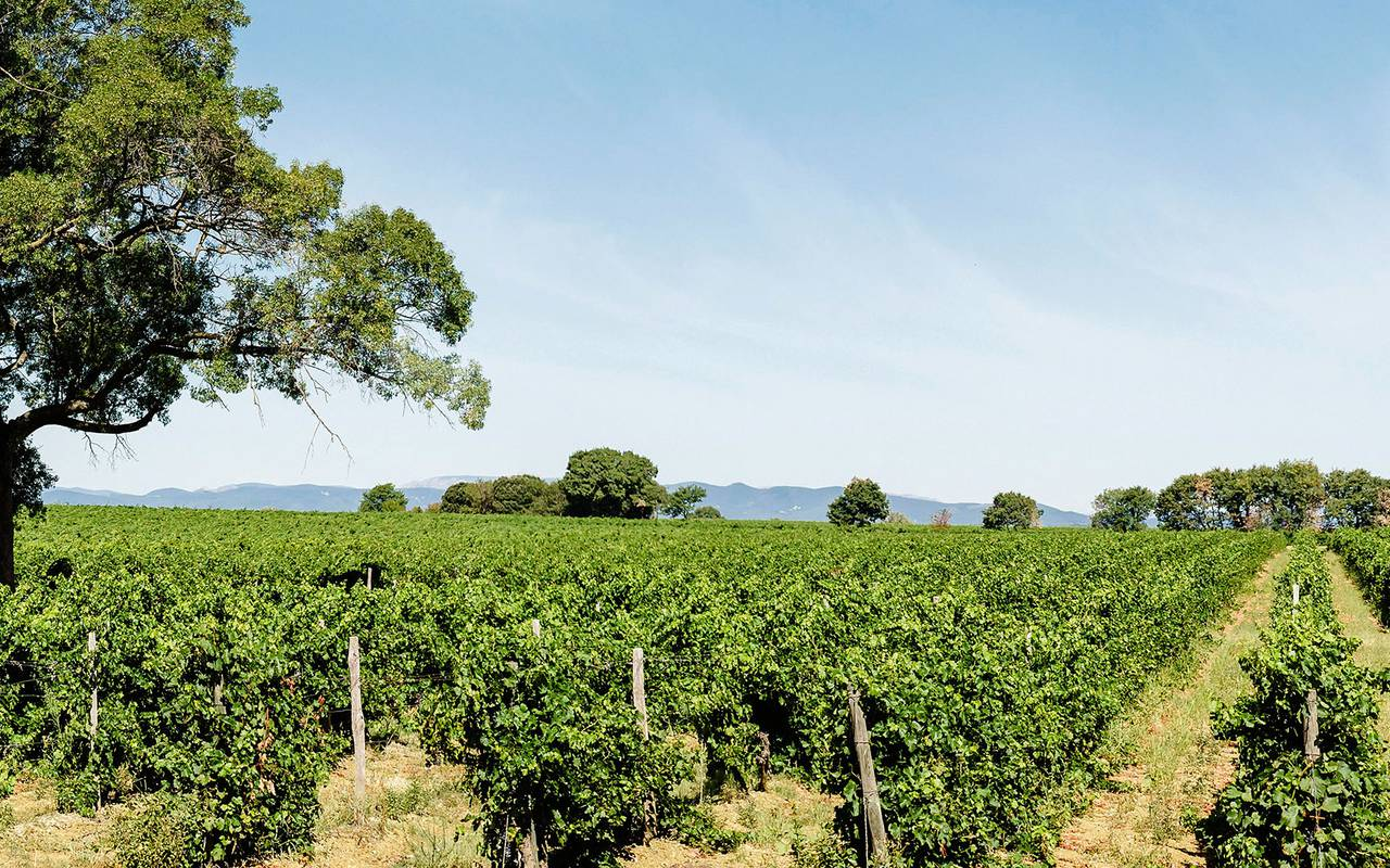 view of the vineyards in Languedoc, Domaine & Demeure events.