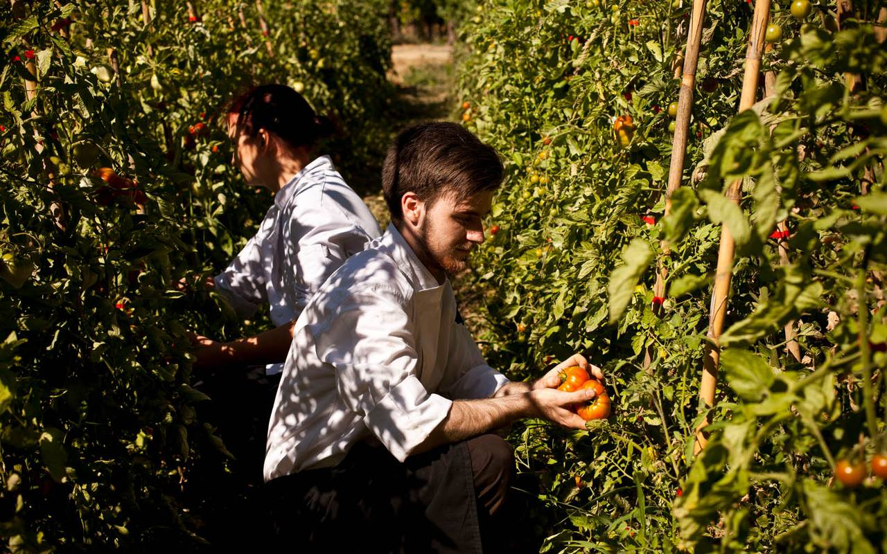 man picking up vegetables, Languedoc Roussillon house rental, Domaine & Demeure