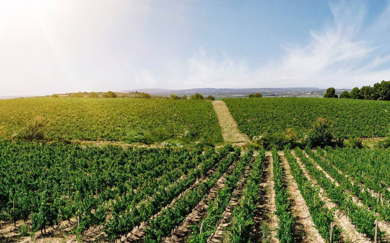 View of the vineyards, best Languedoc wines, Domaine & Demeure Events