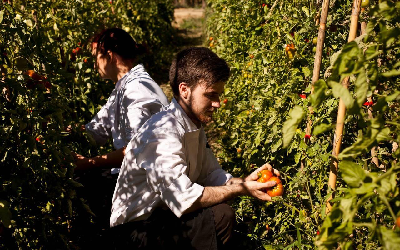 Cuisiniers ramassant des tomates au potager de notre hôtel séminaire Montpellier, Domaine & Demeure Events.